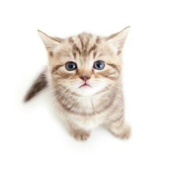 Psotek strzyżenie kotów